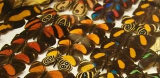 Horniman butterflies_crop2