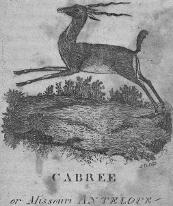 "Engraving of ""CABREE or Missouri ANTELOPE"" from A topographical description of the state of Ohio, Indiana Territory, and Louisiana (Cutler, 1812). Courtesy of the Joseph F. Cullman 3rd Library of Natural History and the Smithsonian Institution Libraries, Washington, D. C."